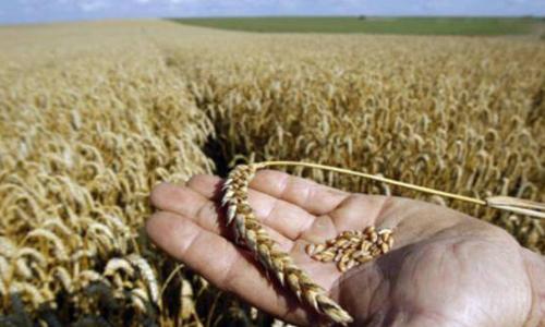 Во избежание голода не следует прерывать мировую торговлю зерном
