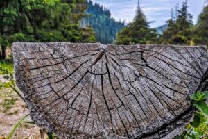 Миллиард деревьев Зеленского против двух миллиардов Токаева