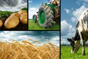 Агромучение наконец станет агробизнесом?